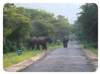 chinnar wild life sanctuary,chandana resort,munnar,kerala